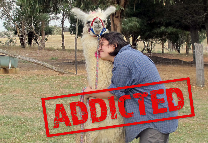 Addicted! A lady hugging a llama