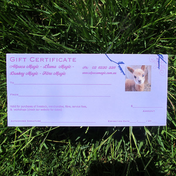 Alpaca Magic gift certificate