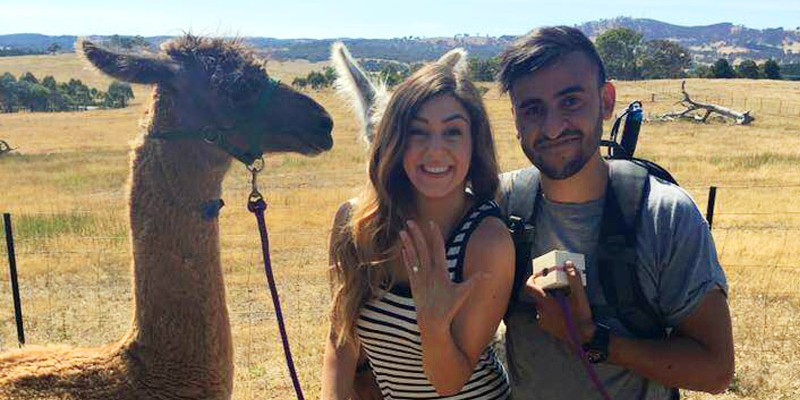 Romantic couple that were engaged on a llama walk