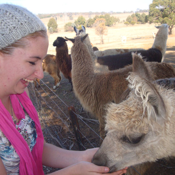 Feeding alpacas and llamas