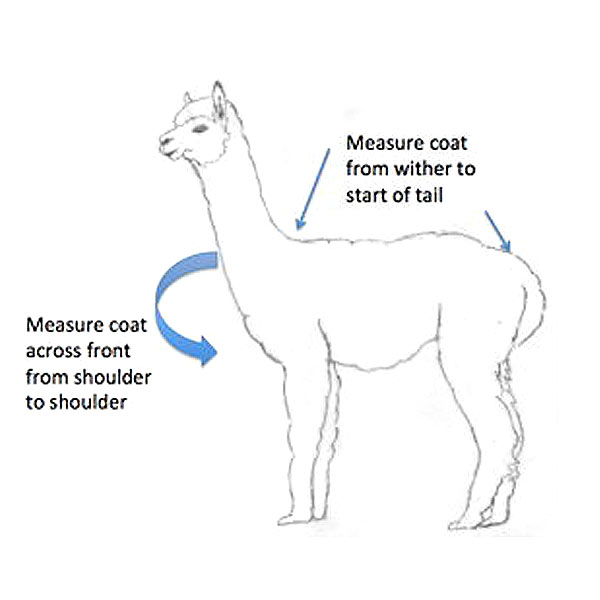 Graphic showing how to measure a llama or alpaca for a temporary coat